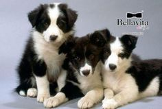 http://www.bellavitainpuglia.net/deals/9-90-euro-invece-di-20-euro-per-spa-e-relax-da-beauty-dog-spa-a-barletta_2225.html