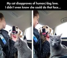 Cat Does Not Approve