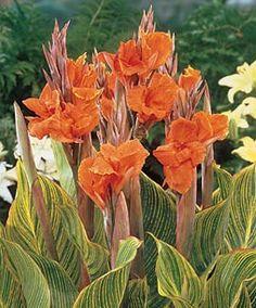 The national flower of suriname is the 39 fajalobi for Spikes tattoo maui