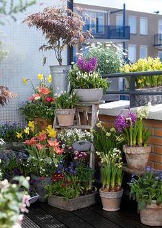 Balcon con flores (bulbos)