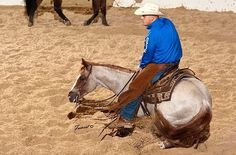 Bet Hesa Cat ridden by Austin Shepard Cute Horses, Beautiful Horses, Human Cow, Cowgirl Pictures, Cutting Horses, Reining Horses, Horse Breeds, Show Horses, Rodeo