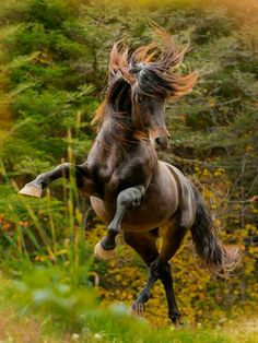 Image discovered by arpita. Find images and videos on We Heart It - the app to get lost in what you love. All The Pretty Horses, Beautiful Horses, Animals Beautiful, Horse Photos, Horse Pictures, Equine Photography, Animal Photography, Animals And Pets, Cute Animals