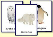 Polar Animals Printables animals silly animals animal mashups animal printables majestic animals animals and pets funny hilarious animal Winter Fun, Winter Theme, Artic Animals, Penguins And Polar Bears, Kindergarten Science, Montessori Materials, Winter Activities, Preschool Winter, Primary Resources