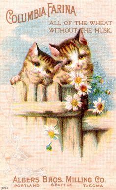 chatons - image vintage (972×1600) Mais