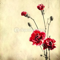 Thinking of a Carnation tattoo with a vintage look