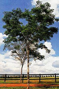 Ricardo Adrián Muradas - Arborização: Harmonia e Beleza