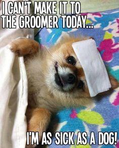 -Repinned- More groomer humor