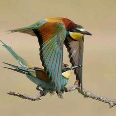 %D8%B7%D9%8A%D9%88%D8%B12.jpg  (958×960) Beautiful birds