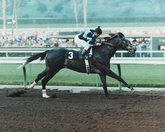 """Spectacular Bid    We love the 'Bid! Gorgeous and known to """"dance"""" before his races, not unlike Zenyatta."""