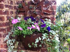 Container that always has ivy and I added color with petunia's.
