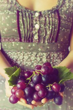 Grapes , my favorite to share! Shades Of Purple, Green And Purple, Olive Green, Green Colors, Giving Hands, Foto Art, Grape Vines, Harvest, Raspberry