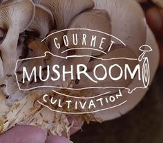 Enter the DIY off-grid mushroom fruiting house - for creating a humid forest simulation chamber, to grow LOTS of mushrooms right on your back porch.