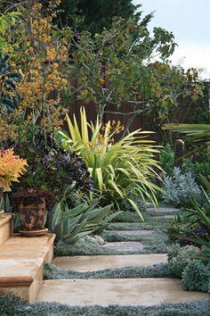 A vibrant garden filled with :Phormium,anigozanthos and Crassula,  carpeted with Dymondia margaretae & aloe