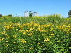 Capitol Columns seen from the wildflower meadow in JULY.