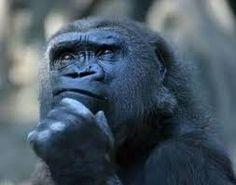 Dizionario:Stolto= Ritenersi intelligente.(Gian).....................Dictionary: Fool = Consider himself intelligent