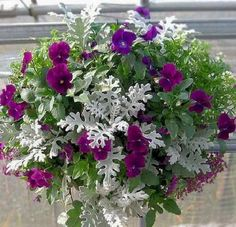 Mar 2017 - Foliage plants accent flowers in a hanging basket. Gardeners can also mix and match foliage to create hanging baskets with no blooms. The variety of color, texture and shape in foliage plants can surp. Beautiful Gardens, Beautiful Flowers, Plants For Hanging Baskets, Winter Hanging Baskets, Pot Jardin, Outdoor Flowers, Dusty Miller, Foliage Plants, Potted Plants