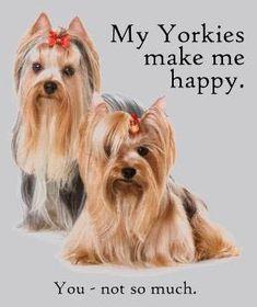 http://www.yorkshire.terrier-gifts.com/yorkie-apparel/funny-yorkies.jpg