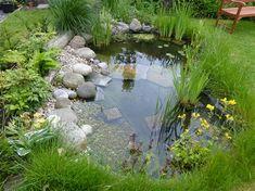 Wildlife pond – one year on…. – Shell'sDuck – My gallery - Modern Pond Landscaping, Ponds Backyard, Landscaping With Rocks, Backyard Waterfalls, Koi Ponds, Ponds For Small Gardens, Small Ponds, Garden Pond Design, Landscape Design