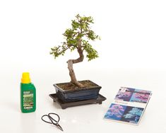 We sell a great range of bonsai gift sets starting from £25 with free UK delivery