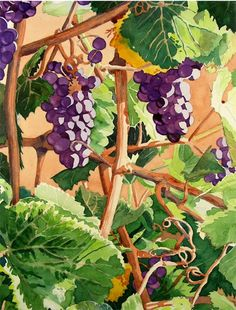 Vineyard Watercolor Pinting, Print - Ripe Purple Grapes paintings, Grape Clusters, Napa Valley Wine, Home Decor, Wall Decor - 10.6 x 13.6