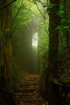 Mombacho Nicaragua. Looks like a magical giant doorway