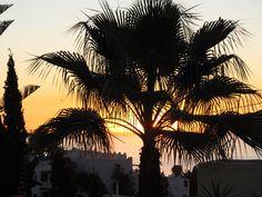 Sunrise through a palm tree