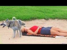 Videos de risa - Caidas - Bromas - Sustos - Animales Compilacion 2015