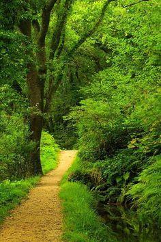 Luxulyan Valley, Cornwall, England.