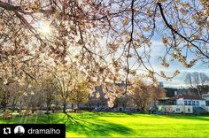 Lovely shot of spring weather on campus from @dramalho#trinity #trinitycollege #trinitycollegedublin #springintrinity#Repost @dramalho with @repostapp・・・Spring in the City…