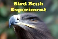 Great idea for zoology 1! Bird Beak Experiment - The Home School Scientist
