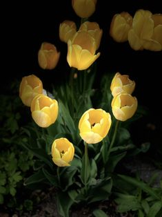 Beautiful Flowers, Canada