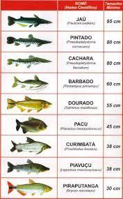 Resultado de imagem para tabelas peixes