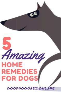 Amazing Home Remedies for Dogs
