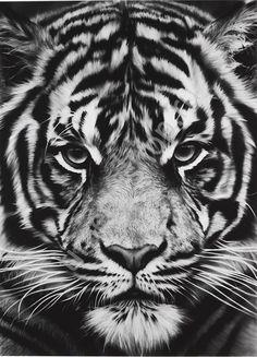 Царский взгляд тигра, картина раскраска по номерам, на холсте, краски и кисти в комплекте размер 40*50см, цена 750 руб.