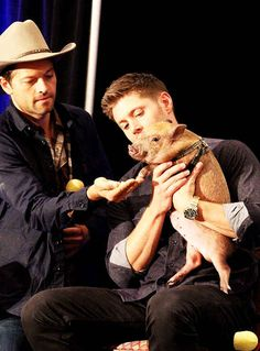 Bonus! Jensen with the pig at the Supernatural panel.   Hi Hello Here's Misha Collins Being Adorable With A Pig