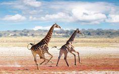 Africa i-want-to-go-everywhere