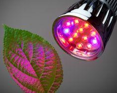 Grow lights 101: Help your indoor plants thrive #garden