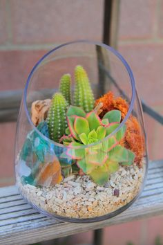 Mini Succulent terrarium w/ coral
