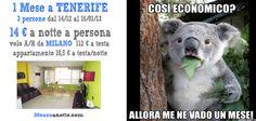 1 MESE a TENERIFE! Per 3 persone dal 14/12/2012 al 16/01/2013. 14 Euro a notte a testa!