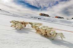 Dog Sledding(Iceland/Greenland) wow, now that's a team. Fan hitching vs Gangline team. Would love to see how they get these dogs out.