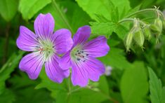 10 Fragrant Plants That Repel Mosquitoes Do you live in a mosquito infested area? If so, here are 10 fragrant plants that can help you repel them this summer. Patio Plants, House Plants, Insect Repellent Plants, Landscaping Shrubs, Mosquito Repelling Plants, Plant Guide, Moon Garden, Types Of Plants, Growing Plants