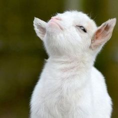 Funny Animal Pictures - View our collection of cute and funny pet videos and pics. New funny animal pictures and videos submitted daily. Baby Goats, Animals And Pets, Baby Animals, Funny Animals, Animals Photos, At Least, Funny Babies, Baby Pictures, Animal Pictures