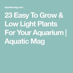 23 Easy To Grow & Low Light Plants For Your Aquarium | Aquatic Mag