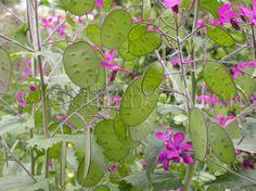 Blumen, Wildblumen, Zierpflanzen