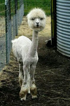 :) This made me choke on my icedtea. & I thought shaving down my cat, that gets massively matted if left alone, was funny!