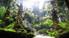Beautiful natural aquascaping - Underwater Landscapes