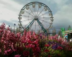 Alaska State Fair, Palmer, AK Sept 2011