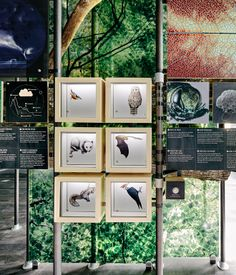 An exhibit on biodiversity offers insight into local flora and fauna.   Photo by Joe Fletcher .