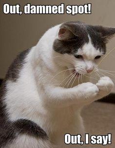 Cats do Shakespeare Funny Cats, Funny Animals, Cute Animals, Animal Memes, William Shakespeare, Shakespeare Insults, Shakespeare Macbeth, Crazy Cat Lady, Crazy Cats