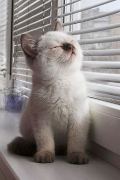 Soft sunshine - your daily dose of funny cats - cute kittens - pet memes - pets in clothes - kitty breeds - sweet animal pictures - perfect photos for cat moms Cute Baby Animals, Animals And Pets, Funny Animals, Wild Animals, Crazy Animals, Animals Kissing, Funniest Animals, Funny Horses, Exotic Animals